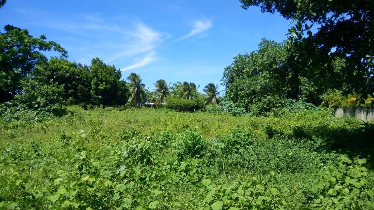 CB-001 Residential lot for sale In Cabarete Dominican Republic